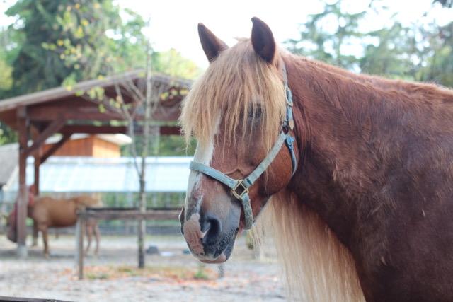 Horse at farm
