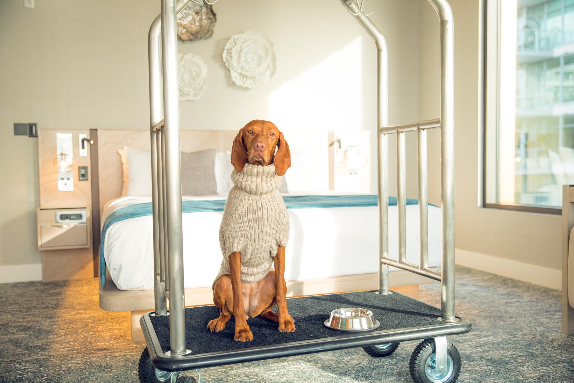 Dog at hotel